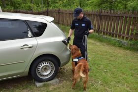 Well trained nose is priceless – training for dog handlers.